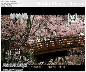 《花海》MV截图 人气:2355